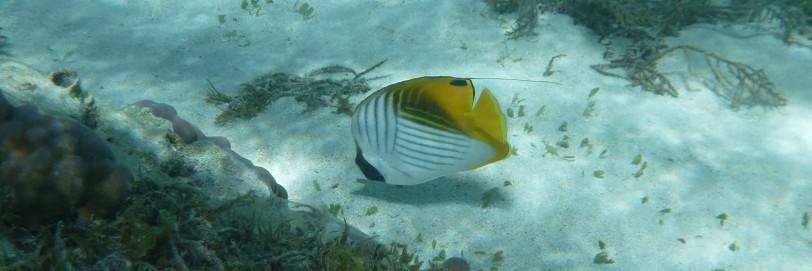 Fiji_011