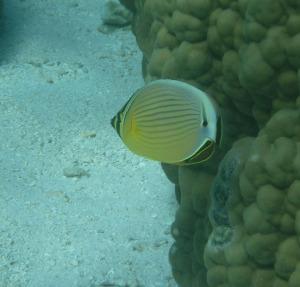 Fiji_012